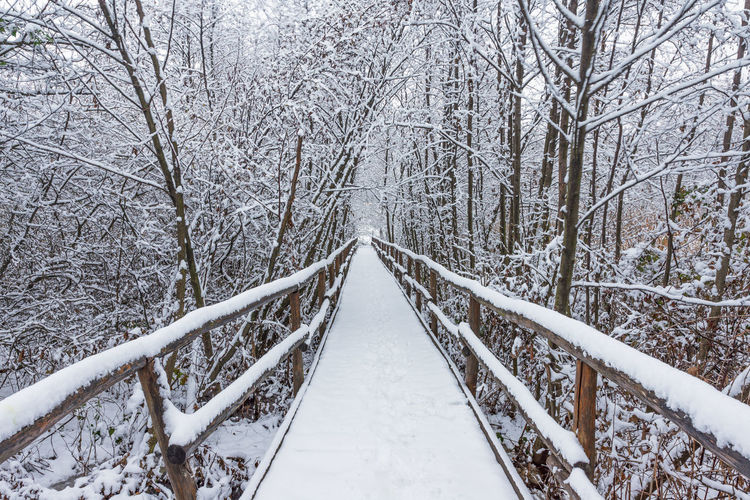 Snow covered footbridge on land