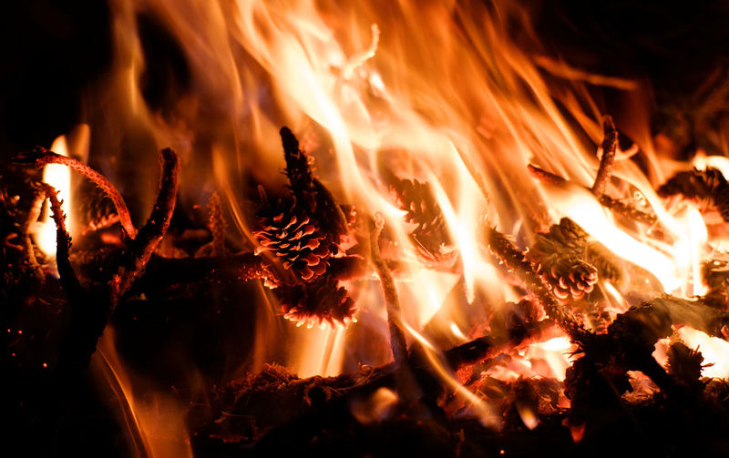 Forest Fire Forest Fires Bonfire Winter Fire Pine Pine Fire Pine Cone Night Bonfire Campfire Flames Burning Nature Fire Motion Flame No People Heat - Temperature Fire - Natural Phenomenon Glowing Night Close-up Orange Color Outdoors Blurred Motion