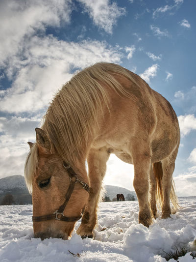 Horse on snow covered field against sky