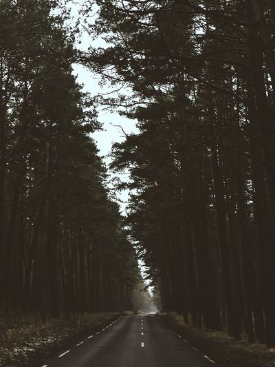 Road The Way Forward Tree Diminishing Perspective Transportation Nature Outdoors Tranquility Day Tranquil Scene No People Forest Growth Landscape Beauty In Nature Sky
