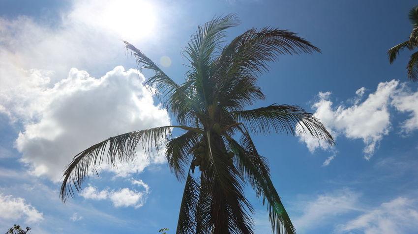 Cuba Habana Habana Vieja Havana Havana, Cuba Hot Palms Traveling Travelling Tree Cuban Sky Destinations Havana Vieja History Palmtree Sky Sun гавана дерево жара история куба небо пальма старая гавана