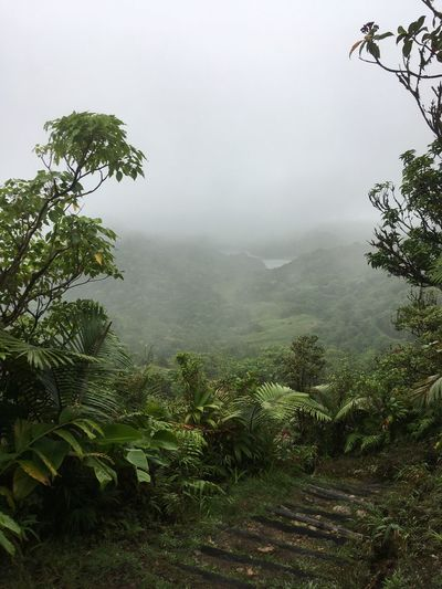 Dominica Beauty In Nature Branch Day Fog Foggy Freshness Green Color Growth Hazy  Idyllic Landscape Lush Foliage Mist Mountain Nature No People Outdoors Plant Scenics Sky Tranquil Scene Tranquility Tree Weather