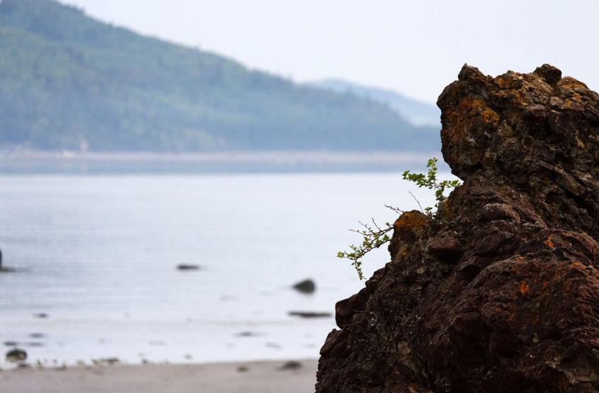 Small leaves coming out of a rock in Bic National Park near Rimouski Beauty In Nature Cliff Close-up Day Focus On Foreground Horizon Over Water Mountain Nature No People Outdoors Rock Rock - Object Rock Formation Scenics Sea Sky Tranquil Scene Tranquility Water