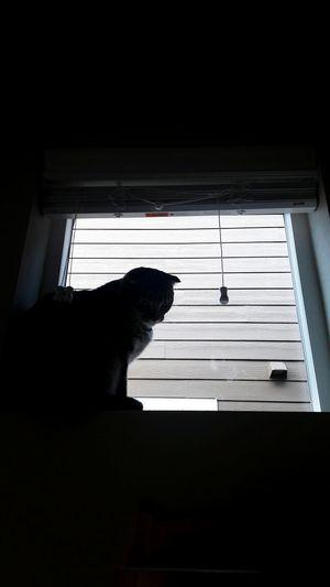 Pets window