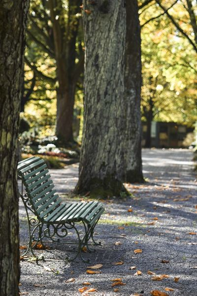 Absence Autumn Bench Change Day Empty Focus On Foreground Footpath Leaf Nature No People Outdoors Park Park - Man Made Space Park Bench Plant Plant Part Seat Tree Tree Trunk Trunk