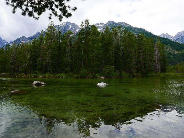 String Lake Green Lake Lake Mountain Moutain Lake Nature Outdoors Reflection Trees And Water Trees At Lake Waterfront