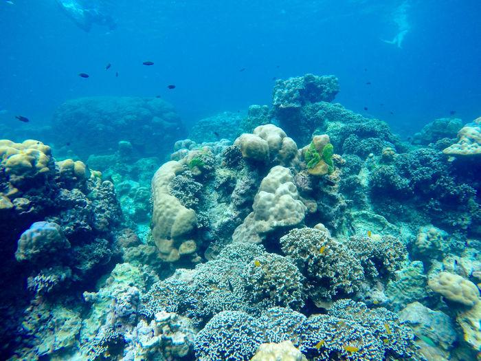 Coral swimming in sea
