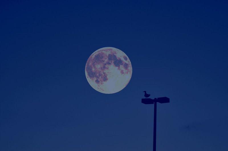Luna piena a Viareggio Viareggio Luna