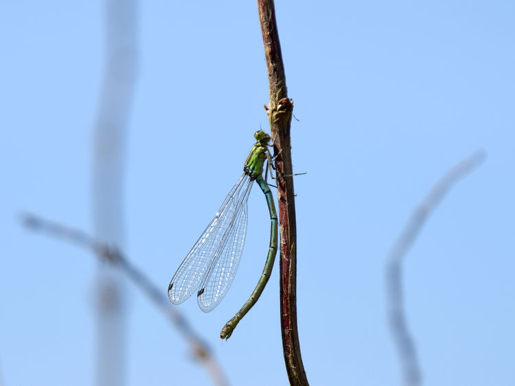 Dragonfly Animals In The Wild Beauty In Nature Close-up Dragonfly Focus On Foreground Insect Nature No People