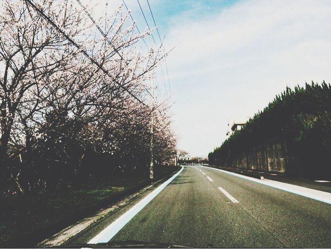 桜並木。Row of cherry blossom trees Sakura Photography Japanese Cherry Blossoms JapanLife Spring Japan Photography Japan Photos Lifeisbeautiful Urban Spring Fever Row Of Cherry Blossom Trees