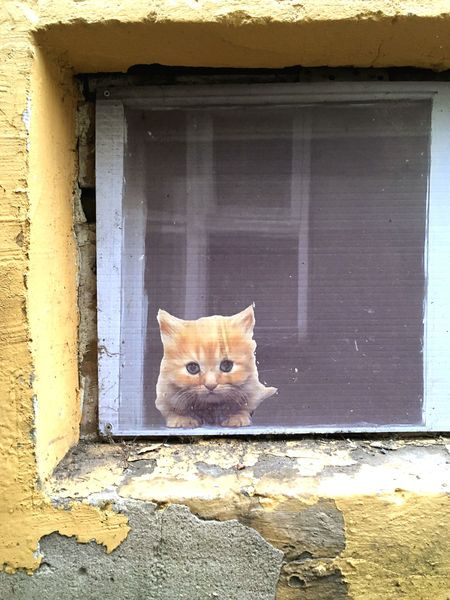 Look who's watching Sticker Tallinn Traveling Domestic Cat Feline Window Cat Pets Domestic Animals Mammal Animal Themes No People Close-up