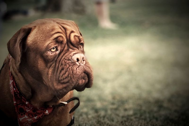 Patience... Portrait AMPt_community Animals Pets Dog