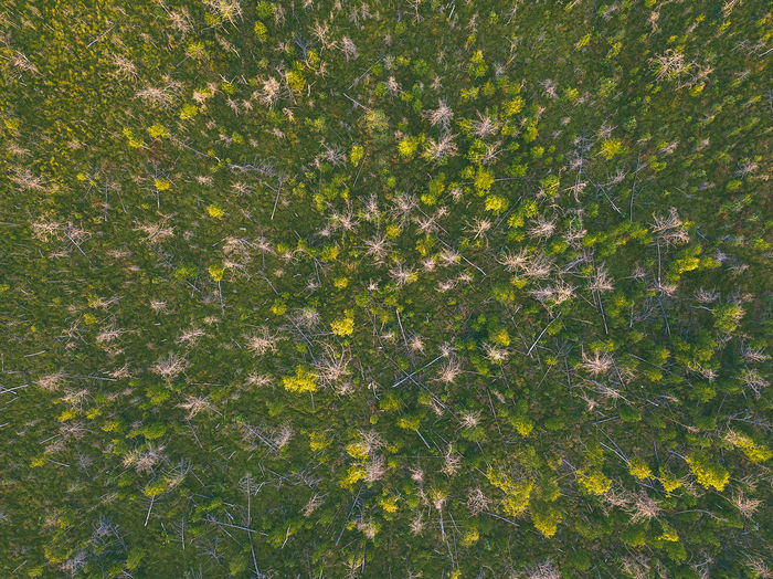 Swamp, drone aerial view. Kaunas county, Lithuania DJI Mavic Pro DJI X Eyeem Drone  Kaunas County Lietuva Lithuania Nature Nature Swamp Aerial Backgrounds Beauty In Nature Day Dubrava Environment Europe Field Flower Flowering Plant Freshness Full Frame Green Color Growth Land Lithuania Travel Mavic Mavic Pro Nature No People Outdoors Plant Scenics - Nature Sunlight Tranquility Yellow