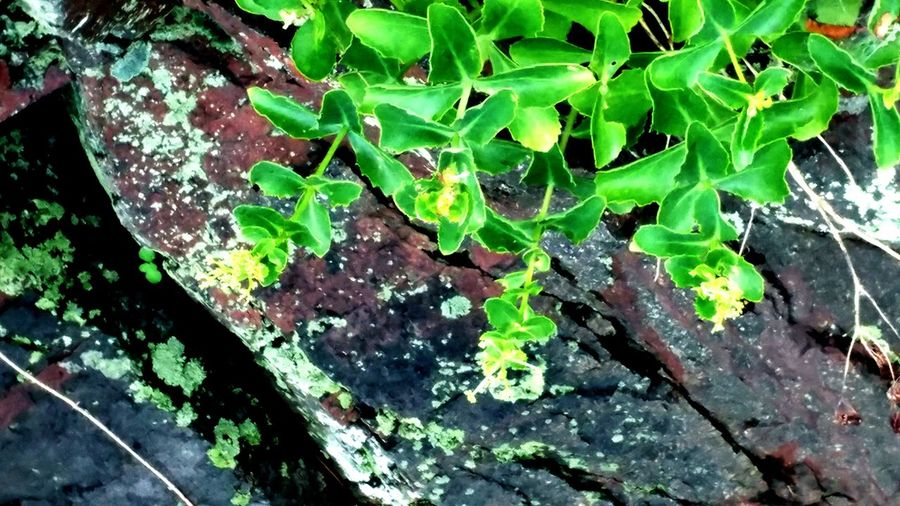 Rock And Plant Rock Moss Rock View Wild Nature Natural Beauty Beautiful View..