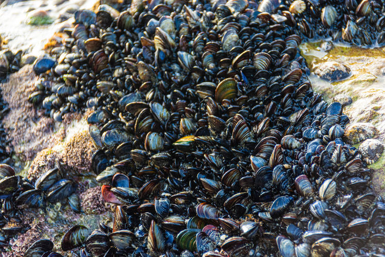Close-up of mollusks in sea