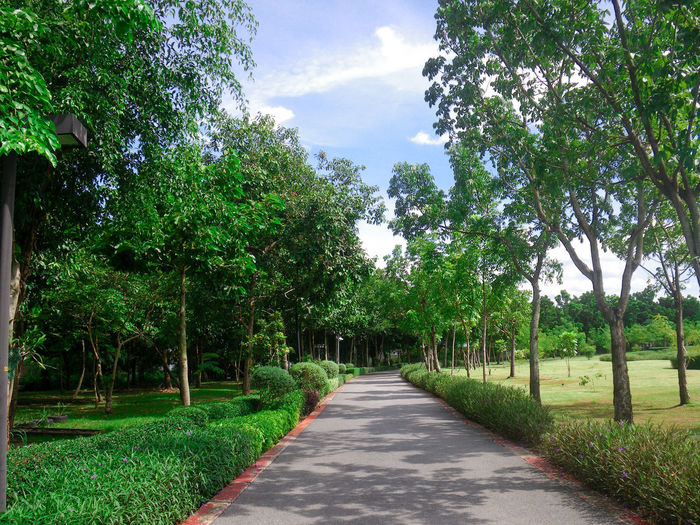 Beauty In Nature Day Diminishing Perspective Direction Footpath Garden Grass Green Color Growth Nature No People Outdoors Park Plant Road Scenics - Nature Sky Thai Garden The Way Forward Tranquil Scene Tranquility Transportation Tree Treelined