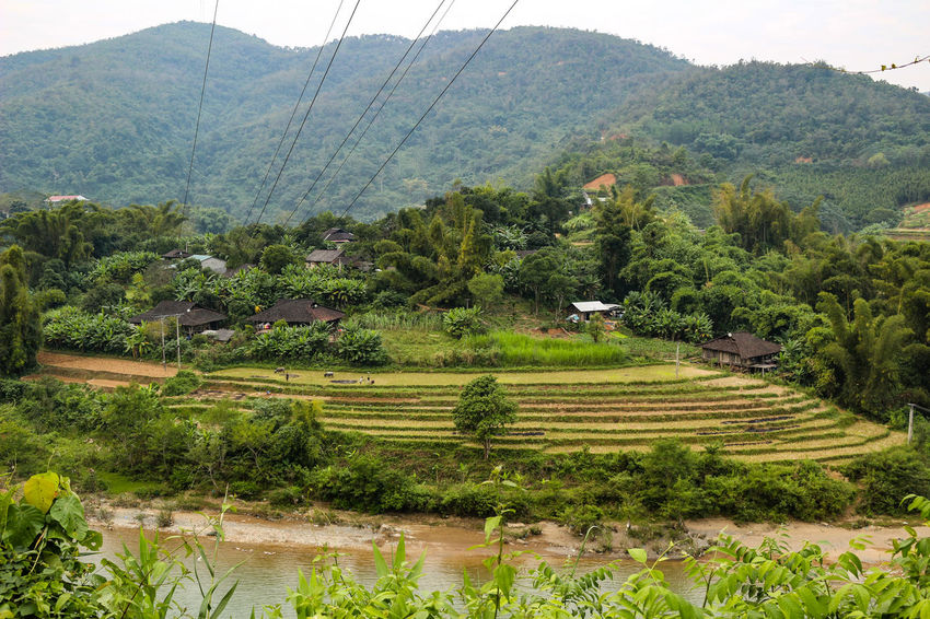 mountains in vietnam Vietnam Vietnamphotography Vietnam Mountains Đồng Văn Plant Tree Landscape Scenics - Nature Beauty In Nature Tranquil Scene Green Color Environment Growth Agriculture Tranquility Nature Mountain Land Rural Scene Field Day Farm No People Rice - Cereal Plant Outdoors Plantation