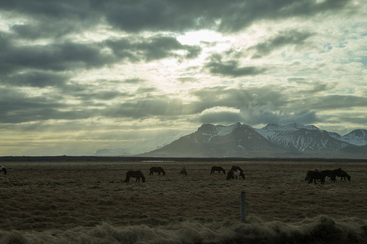 Dramatic Sky Horses Mountain Mountains Mountains And Sky