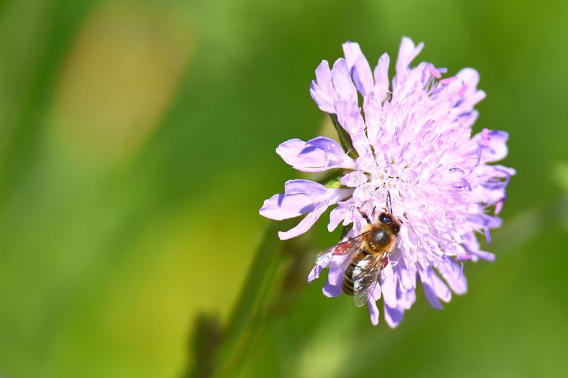 Bee Insect Beauty In Nature EyeEm Nature Lover EyeEm Selects My Best Photo Flowering Plant Flower Insect Invertebrate Animal Animal Themes Growth Vulnerability  Close-up Flower Head Freshness Fragility Animal Wildlife Plant Purple Petal Animals In The Wild One Animal