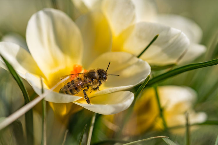 Animal Animal Themes Animal Wildlife Animals In The Wild Beauty In Nature Bee Close-up Flower Flower Head Flowering Plant Fragility Freshness Growth Insect Invertebrate No People One Animal Petal Plant Pollen Pollination Selective Focus Vulnerability