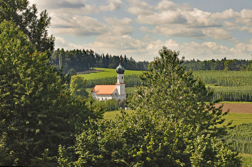 pilgrimage church lohwinden/wolnzach Agriculture Crop  Day Farm Field Grass Grassy Green Green Color Growth Lohwinden Lush Foliage Outdoors Pilgrimage Church Relaxing Moments Remote Rural Scene Tranquil Scene Tree Tropical Climate Yellow