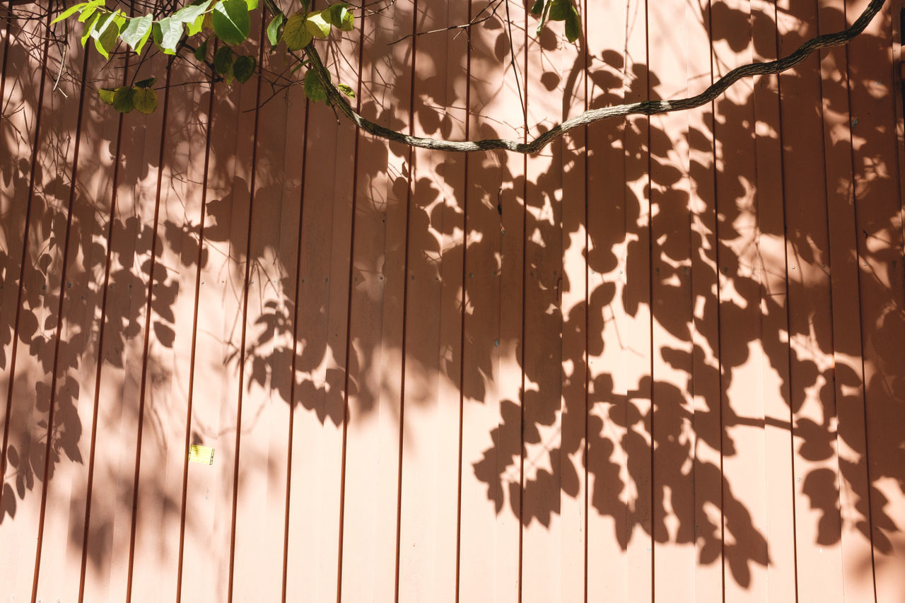 shadow, hanging, no people, plant, day, close-up, sunlight, leaf, ivy, outdoors, nature, tree