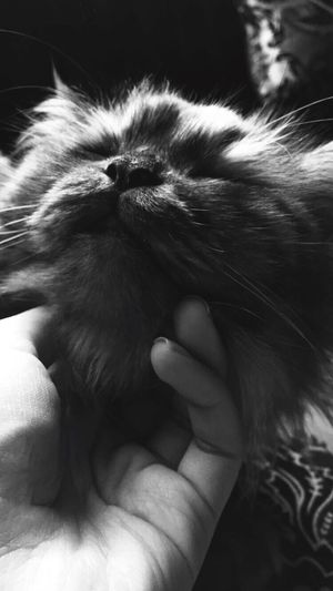 Cat Taking Photos Love Cute Pets Cool Family Time Cute Black And White Photography White follow me on instagram : hllneef