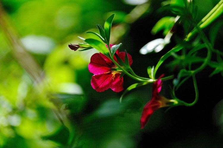 Sunlight ☀ Plant Flowering Plant Flower Beauty In Nature Close-up Growth Freshness Green Color Petal Nature Plant Part Focus On Foreground Outdoors Flower Head