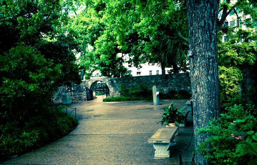 Bench Day Garden Growth Hidden Path Nature No People Outdoors Plant Stone Wall Tree Walkway