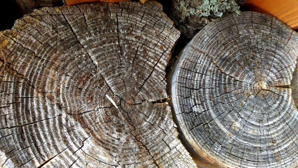 sawed wood Drytree природные узоры спил дерева узоры текстура фон круги деревянный рустик Log Created By Nature Naturalmaterial Rustic Rustic Beauty Close-up Texture Woodtexture Bacground Plant Motifs Patterns Patterns In Nature Patterns & Textures Pattern Photography Pattern Of Nature