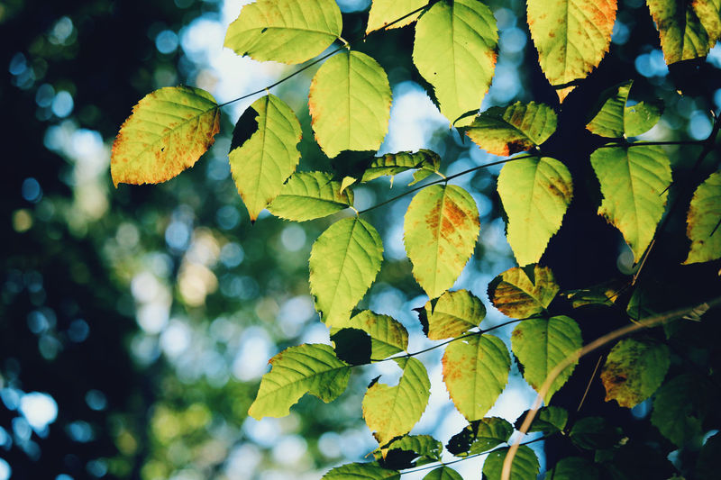 Close-up of leaves growing on tree