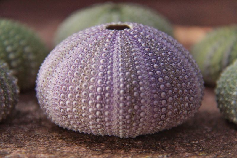 Close-up of sea urchin shell on sand