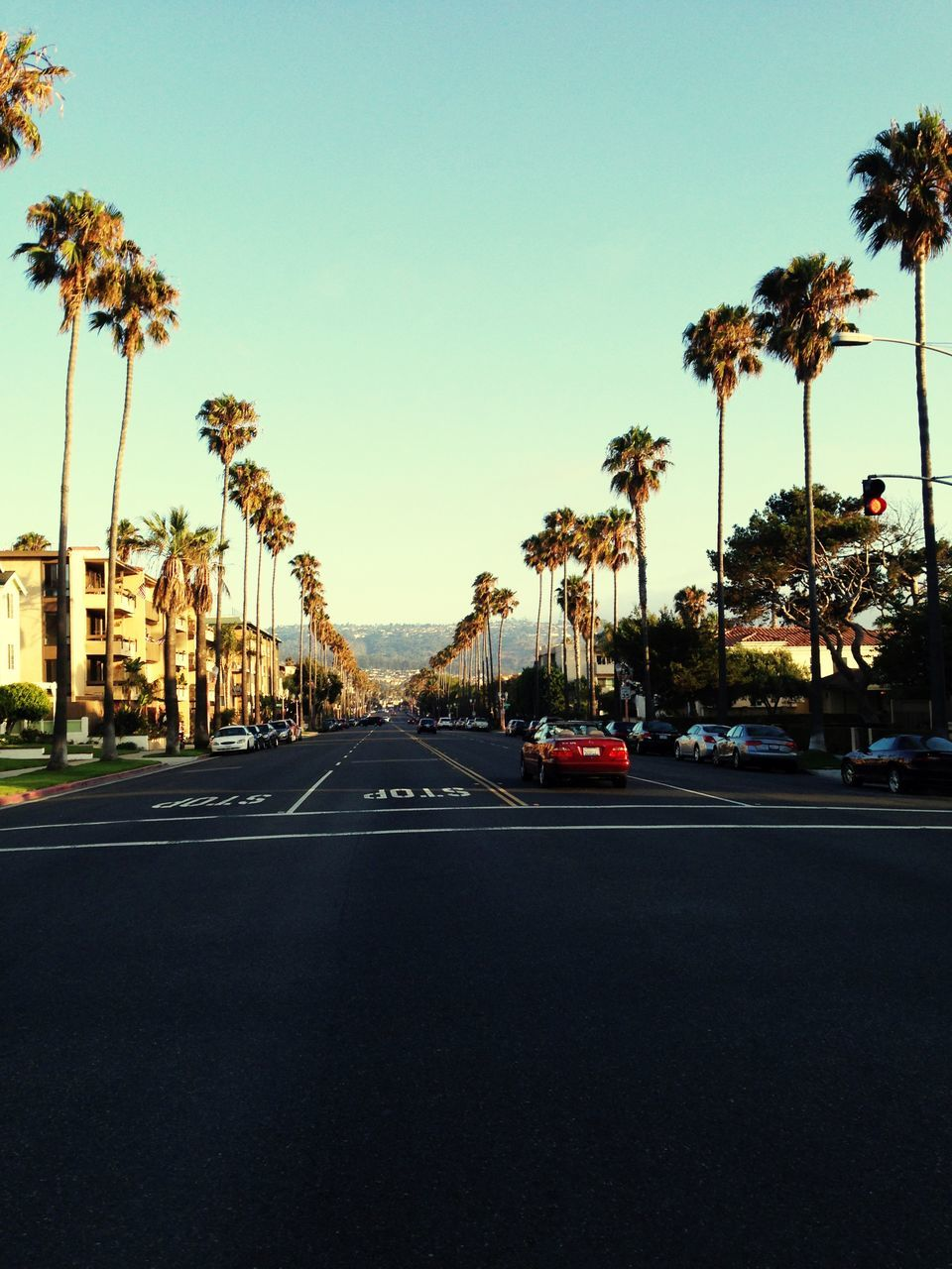 Cars On City Street Amidst Palm Trees Against Clear Sky