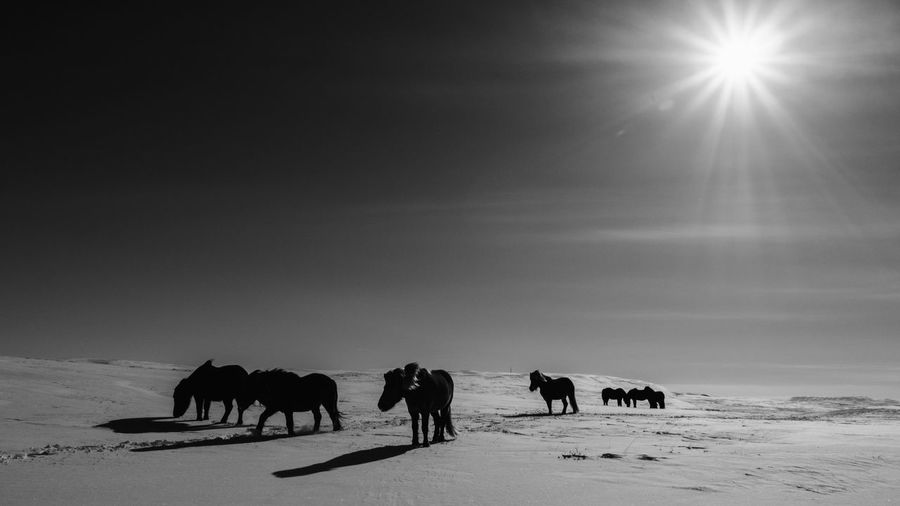 Animal Themes Mammal Animal Group Of Animals Domestic Animals Sky Domestic Livestock Nature Land Vertebrate Winter Animal Wildlife Landscape Pets Snow Sun Environment Silhouette No People Herbivorous Herd