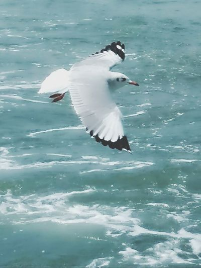 Seagulls Arabian Sea Beauty In Nature Spread Wings Seagulls Flying Way To Elephanta Caves Bird flying