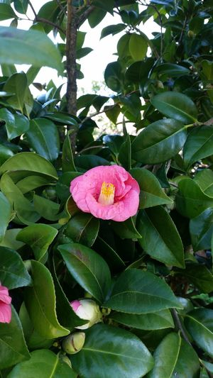 Flower Pink Color Leaf Plant Freshness Fragility Beauty In Nature Green Color Petal Flower Head No People Close-up