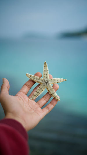 Starfish in my hand