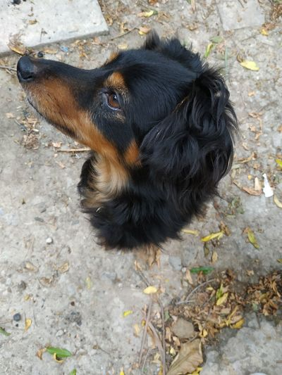 Dogs Charly Dog Beaty Animals In The Wild Famous Charlie Dog Charly Dog Dogs Of EyeEm Dog Charlie Dog Love EyeEm Best Shots Pets Of Eyeem EyeEm Selects EyeEm Nature Lover Famous People Charly Pet EyeEmNewHere Animal EyeEm Gallery Eye Pets Dog Portrait Black Color Close-up Canine Animal Face Stray Animal Animal Nose Animal Ear Adult Animal At Home Vertebrate Whisker Chihuahua Beagle Pampered Pets Pet Collar Animal Tongue Purebred Dog