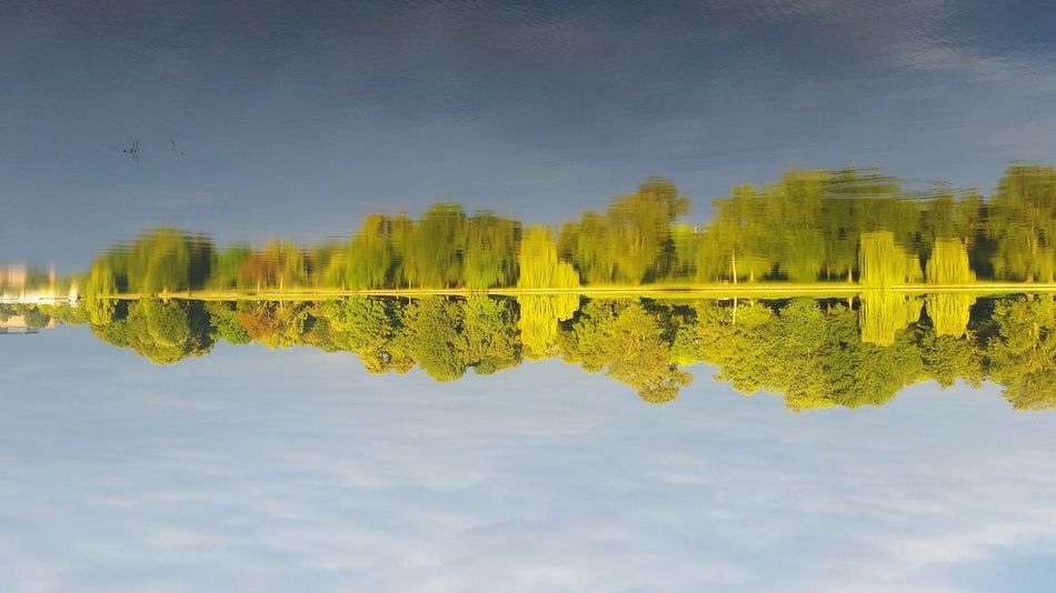 Sunday_flip 180° Mirrored Reflection Water Reflections Nature Trees My Fuckin Berlin Check This Out No People Rummelsburger Bucht Eye4photography  Shootermag AMPt_community Reflections Battle Of The Cities TakeoverContrast Capture Berlin The Great Outdoors - 2017 EyeEm Awards