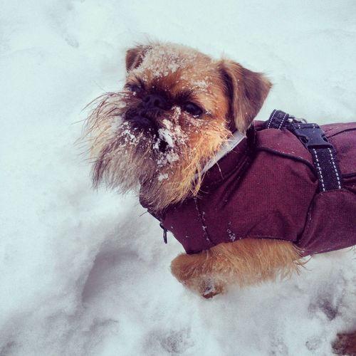 Snömonster!