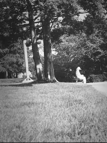 Under The Tree Bw_collection Black And White