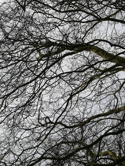 No People Winter Tree Branches Branches And Sky Looking Up Backgrounds Full Frame Pattern Growing
