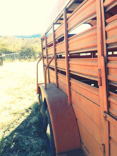 Country Girl Horse Trailer Open Landscape Freedom And Sunshine