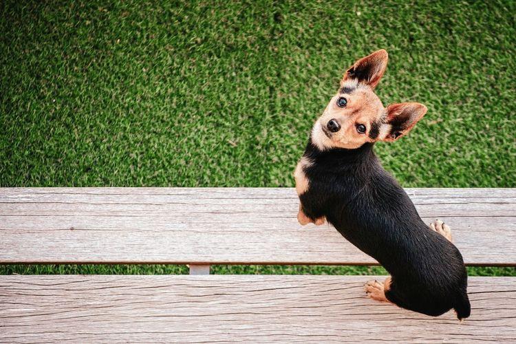 Bank Dog Pets