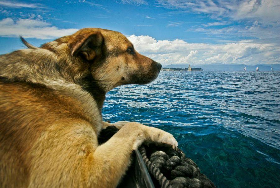 Calamar contempla su amado mar mientras pasea sobre un bote zodiac frente a las costas de la Isla grande de Chiloe. Doglover Dogs Sea View Dog And Sea Color Photography