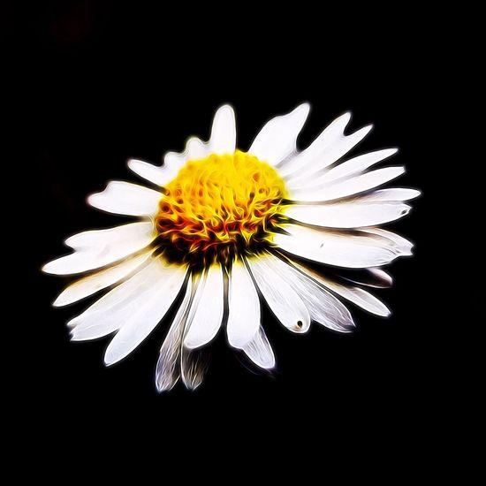 IPSPaint Daisy Flower