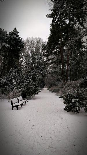 Pa pa Winter