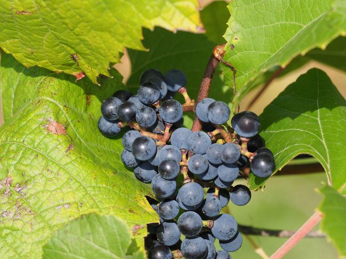 Wineyards in