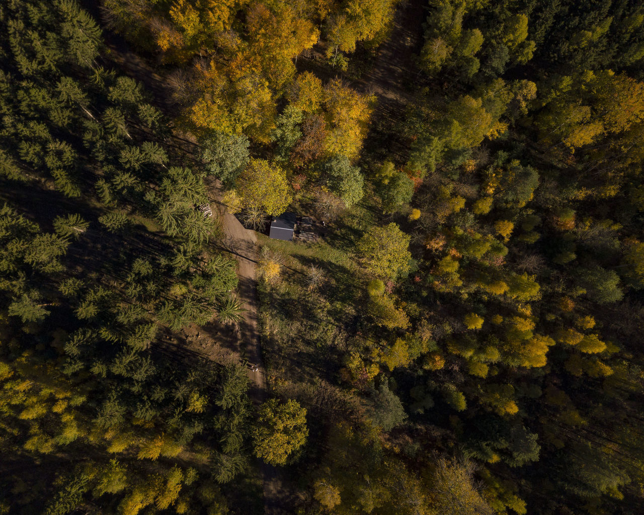 tree, plant, forest, beauty in nature, nature, land, tranquility, scenics - nature, high angle view, growth, no people, green color, tranquil scene, aerial view, landscape, autumn, non-urban scene, day, transportation, foliage, outdoors, woodland, pine woodland, coniferous tree