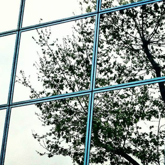 Reflex d'un arbre en un edifici. / Reflection of a tree in a building. Reflection Reflections Tree Trees Building Buildings Eyeem Reflection Eyeem Reflections Eyeem Tree EyeEm Trees EyeEm Tree Collection Eyeem Trees Lovers EyeEm Building EyeEm Buildings Barcelona Catalonia Eyeem Barcelona Eyeem Catalonia EyeEm Gallery EyeEm Best Photography EyeEm Best Pics Eyeem Best Photos Eyeem Best Photo Things I Like Showcase April